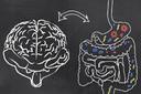 As relações entre intestino e cérebro
