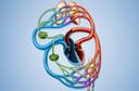 Circulação linfática - como ela acontece no seu corpo?