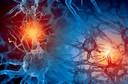 Como as funções do nosso corpo se comunicam? O papel dos neurotransmissores no organismo
