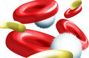 Composição e funções do sangue