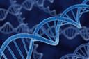 Genética - Alguns conceitos básicos