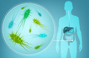 Microbioma intestinal humano