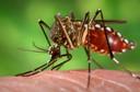 O que devemos saber sobre a febre chikungunya?