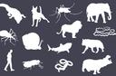 Os animais que mais matam no mundo